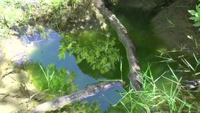 reflexión en la charca cerca de la cascada en Maries, Thassos Grecia almacen de video