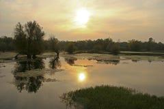 Reflexión en naturaleza Foto de archivo