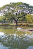 Reflexión grande del árbol y del jardín Foto de archivo libre de regalías