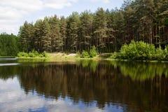 Reflexión hermosa de árboles en la charca Fotografía de archivo libre de regalías