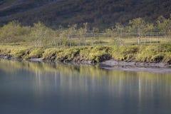 Reflexión hermosa de los árboles de abedul en el agua de río azul Foto de archivo libre de regalías