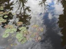 Reflexión hermosa en el agua de cuál está arriba imagen de archivo libre de regalías