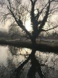 Reflexión inusual del árbol con el sol detrás en el canal Foto de archivo
