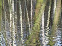 Reflexión a medias abstracta del bosque Fotografía de archivo