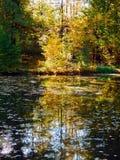 Reflexión otoñal de los árboles de haya en el agua Imagenes de archivo