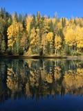 Reflexión perfecta de las hojas de otoño amarillas y verdes del árbol de pino foto de archivo libre de regalías