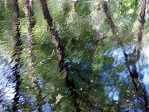 Reflexión pintoresca de árboles Fotos de archivo