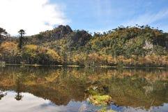 Reflexión pura en los lagos del parque de Cani, Chile Fotos de archivo libres de regalías