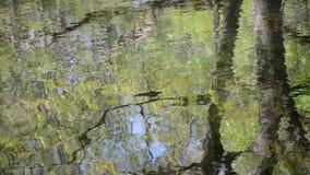 Reflexión superficial del agua almacen de video