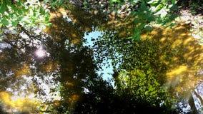 Reflexión verde de la laguna en el agua Fotos de archivo libres de regalías