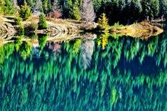 Reflexión verde del lago gold de los árboles Fotos de archivo libres de regalías