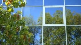 Reflexi?n de ?rboles en las ventanas de un edificio alto moderno con una fachada de cristal, coloc?ndose cerca del parque almacen de video