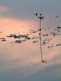 Reflexión de la libélula Foto de archivo libre de regalías