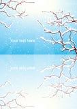 Reflexión de la ramificación de árboles del invierno Fotografía de archivo