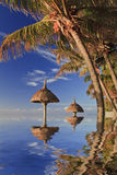 Reflexión de palmeras tropicales en el océano Imagen de archivo libre de regalías