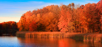 Reflexión del árbol del otoño Fotografía de archivo