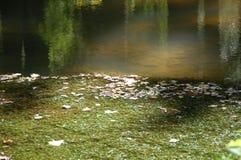 Reflexion över vatten - svår körningsslinga Fotografering för Bildbyråer