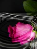 reflexion Royaltyfria Foton