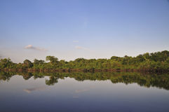 Reflexion auf dem Dschungel Lizenzfreie Stockbilder
