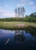 Reflexion auf der Oberfläche des Frühlingswaldes Stockbilder