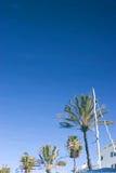 Reflexion auf Yachten und Palmen im tiefen blauen Wasser Stockfotografie