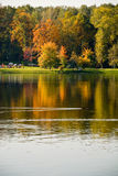Reflexion of the autumn. Forest Stock Image