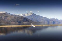 Reflexion av berg på Pangong sjön med bakgrund för blå himmel Leh Ladakh, Indien Fotografering för Bildbyråer