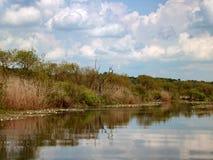 Reflexion av den bruna vassen och moln i sjön Royaltyfria Bilder