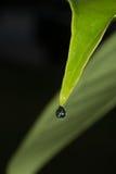Reflexion av det gröna bladet i vattendroppe Fotografering för Bildbyråer