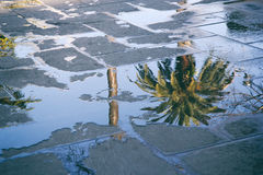 Reflexion av en palmträd i en pöl Arkivbilder