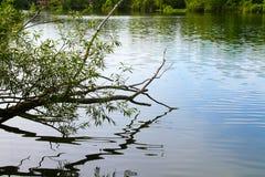 Reflexion av en trädlem över en sjö Arkivfoton
