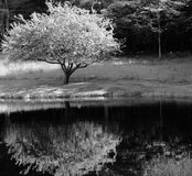 Reflexion av ett träd Royaltyfria Bilder