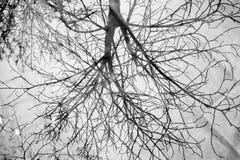 Reflexion av ett träd i en genomskinlig pöl stock illustrationer