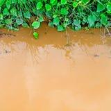 Reflexion av gräs i vatten Royaltyfria Bilder