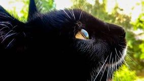 Reflexion av himlen i ögat av en svart katt royaltyfria bilder