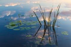 Reflexion av moln i vattnet med näckrors arkivbild