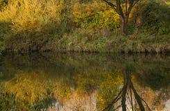 Reflexion av naturen i vatten Royaltyfria Foton