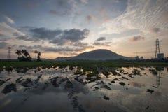 Reflexion av risfältfältet med lerigt Arkivbilder