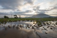 Reflexion av risfältfältet med lerigt land i förgrund Arkivbilder