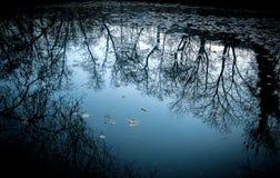 Reflexion av skogen i förkylningblåttsjön Arkivbild