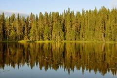 Reflexion av skogen i sjön för solnedgång Arkivfoto
