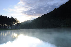 Reflexion av skogen på sting Oung, Thailand Royaltyfri Bild