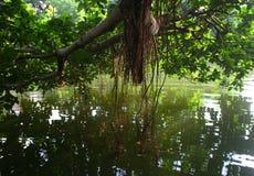 reflexion av träd i den lugna sjön Arkivfoto
