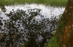 reflexion av träd i den lugna sjön Arkivbild