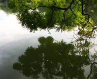 reflexion av träd i den lugna sjön Fotografering för Bildbyråer