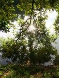 reflexion av träd i den lugna sjön Royaltyfri Bild
