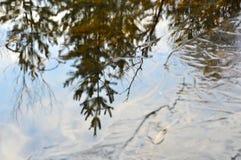 Reflexion av träd i en djupfryst flod Vatten och tunn is Höst Royaltyfria Bilder