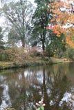 Reflexion av träd i flodbusken Royaltyfri Foto