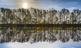 Reflexion av träd i flodtauber Royaltyfri Foto