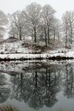 Reflexion av träd i sjön Royaltyfria Bilder